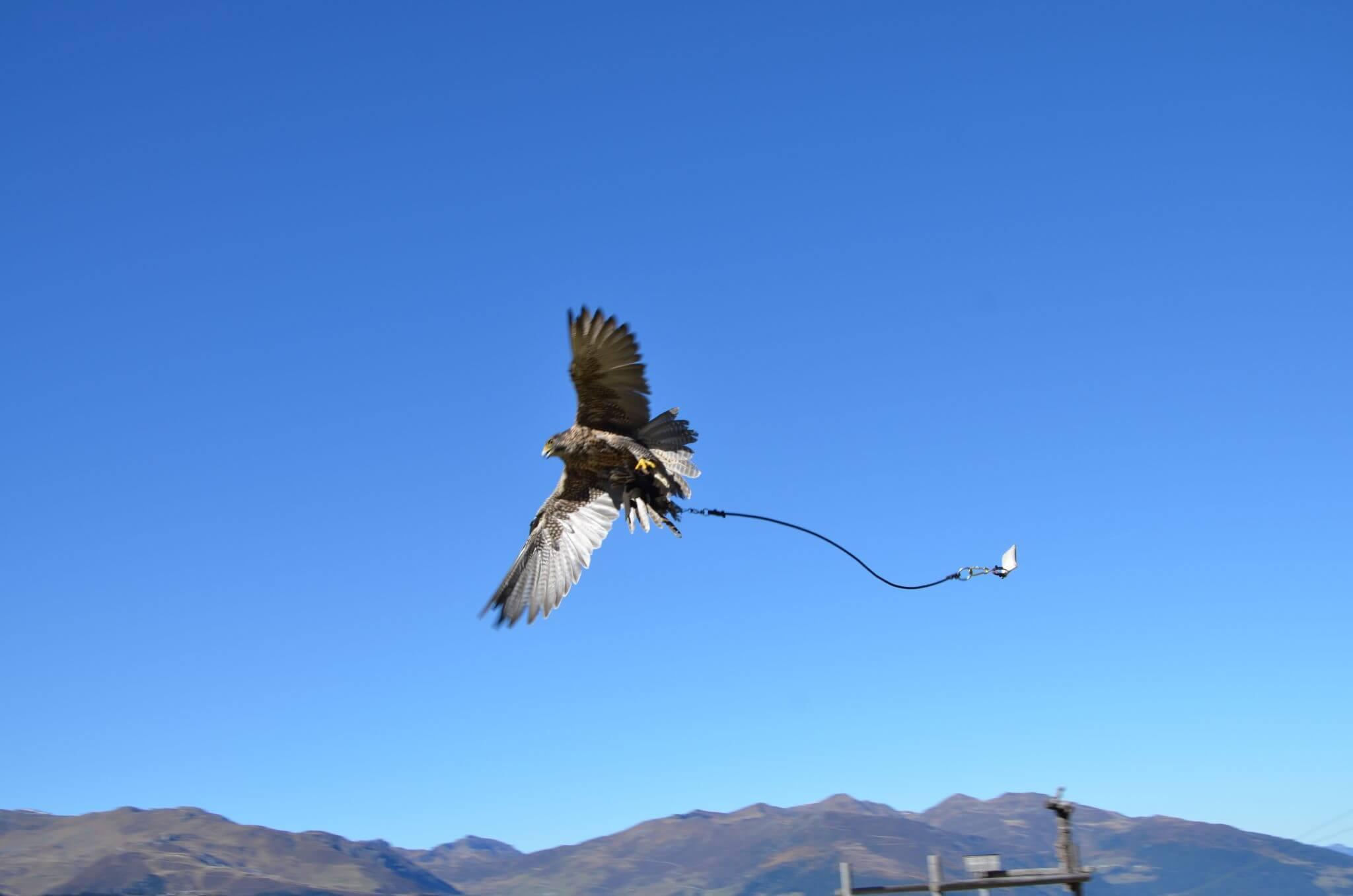 Greifvogelschau Adlerbühne Mayrhofen